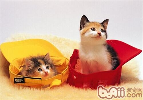 如何判断小猫年龄 -幼猫饲养